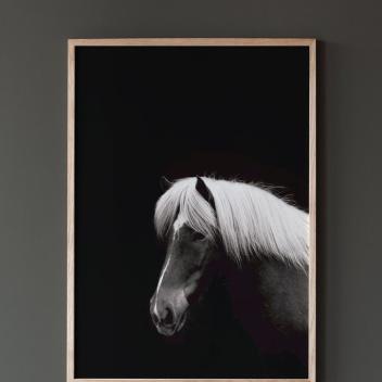 Hestur Poster 50x70