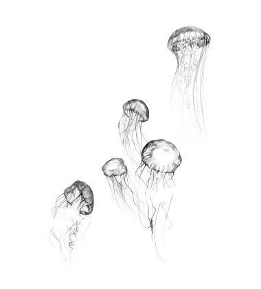 Jellyfish Poster 50x70