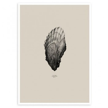 Oyster Poster 50x70 Sand
