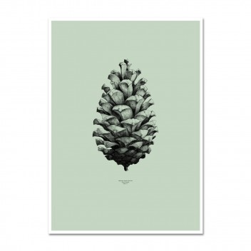Pine Cone Poster 50x70 Mint Green