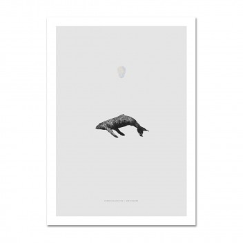 Whale Reprise Poster 50x70