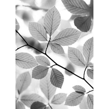 Ścierka kuchenna Beech Leaves 50x70 Szara