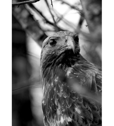 Ścierka kuchenna Eagle 50x70 Czarna