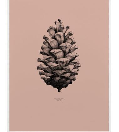 Pine Cone Poster 50x70 Komodo Pink