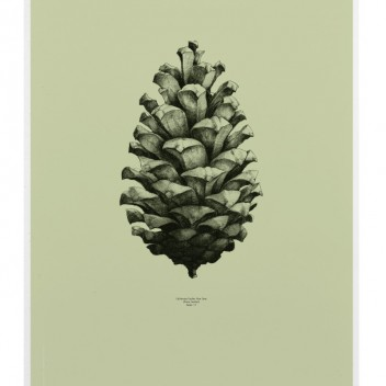 Pine Cone Poster 50x70 Light Forest Green