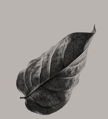 Sabi Leaf 01 Poster 50x70 Grey