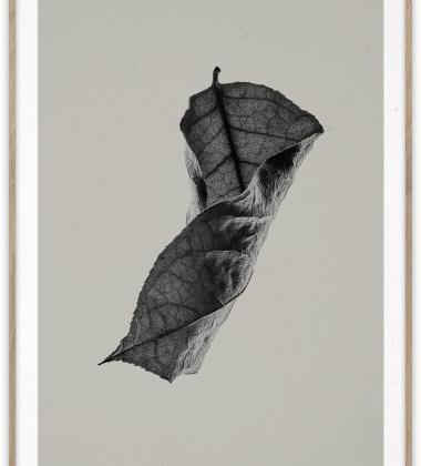 Sabi Leaf 04 Poster 50x70 Grey