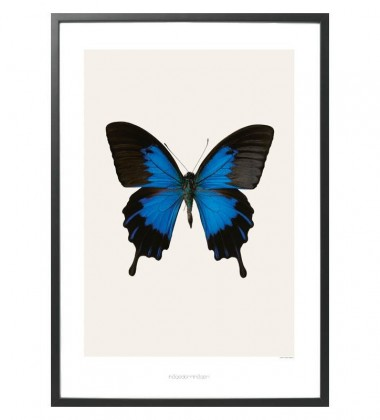 S1 Poster 50x70 Motyl