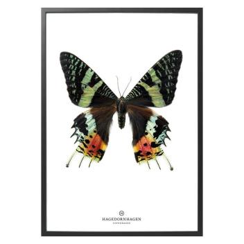 S14 Poster Motyl 30x40 GREEN BUTTERFLY