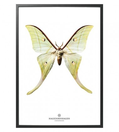 S15 Poster 50x70 Motyl