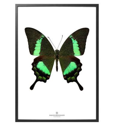 S17 Poster 30x40 Motyl