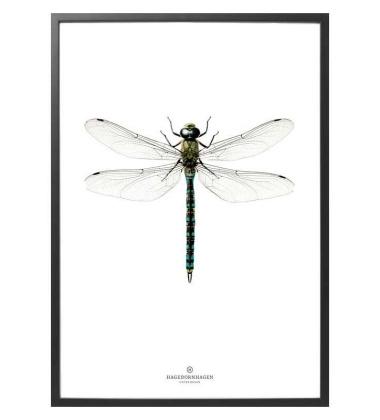 B7 New Poster 30x40 Ważka Niebieska w ramce