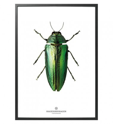 B9 Poster Żuk 30x40 GREEN BUG