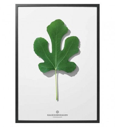 F3 Poster 30x40 Folium Fig