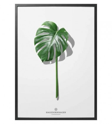 F5 Poster 30x40 Folium Monstera